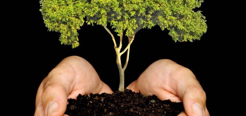 Responsabilidad Social Empresarial Verde en pro de la reforestación