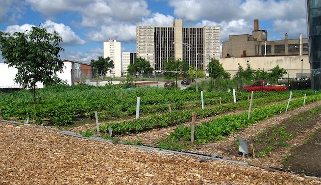 Armando Iachini: Ideas para ciudades más sustentables